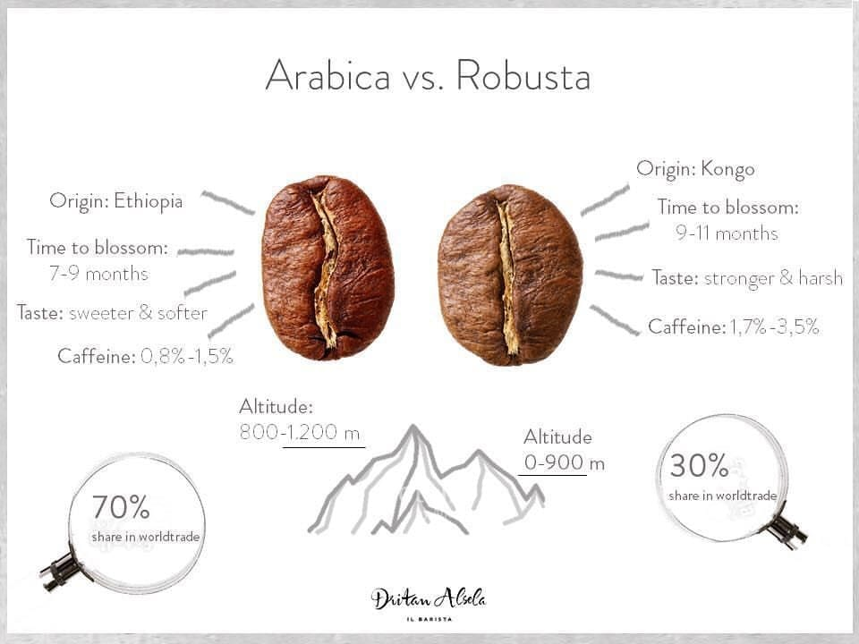 Arabica vs Robusta